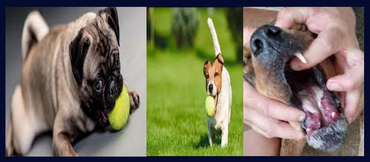 Are tennis balls bad for dogs