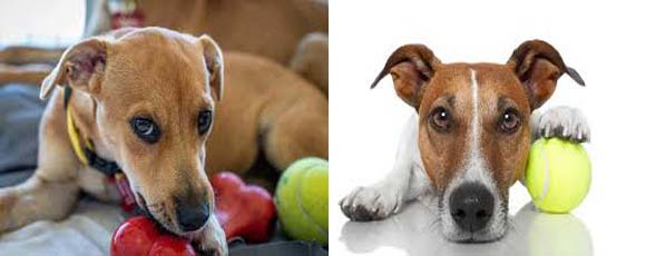 Are tennis balls safe for dogs