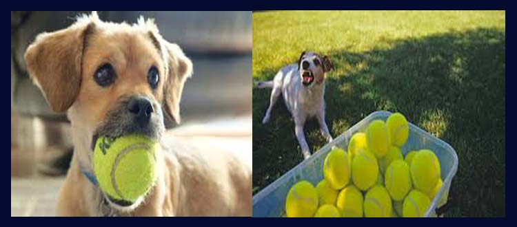 Why do dogs like tennis balls